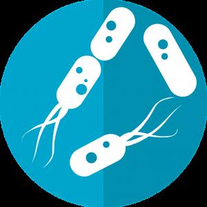 bacteria-icon-2316230_960_720